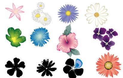 Flor Vector Set in Color