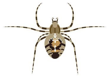 Vector Cross Spider