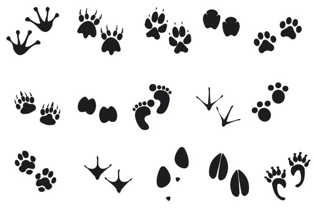 Human Animal Footprints - Vector download