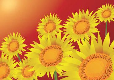 Summer Sunflowers Background