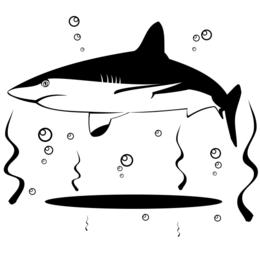 Vector de tiburon