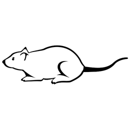 Black and White Mouse Sketch