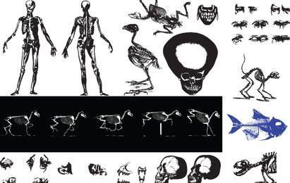 Vectores esqueleto