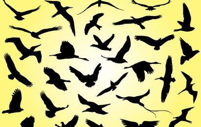 Schattenbild fliegende Vögel