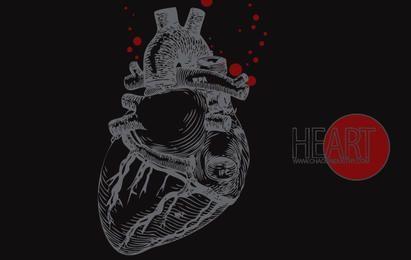 Menschlicher Herz-Vektor