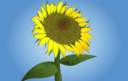 Vector Sunflower fotorrealista