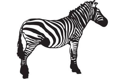 Zebra de vetor
