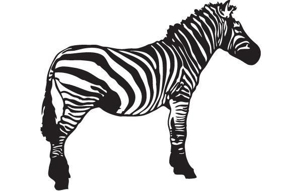 Vector Zebra