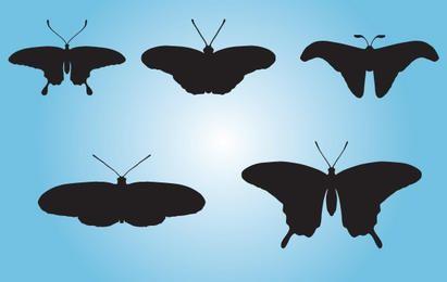 Schwarze Schmetterlingspackung