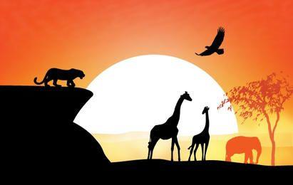 Sunset View of Safari