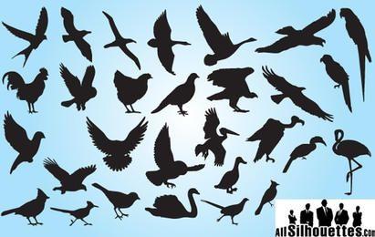 Paquete de aves silueta