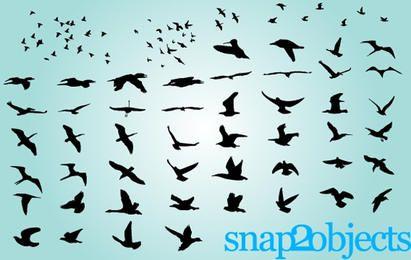 Pássaros voando grupo e separadamente