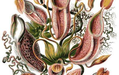 Botanic Carnivorous Plant