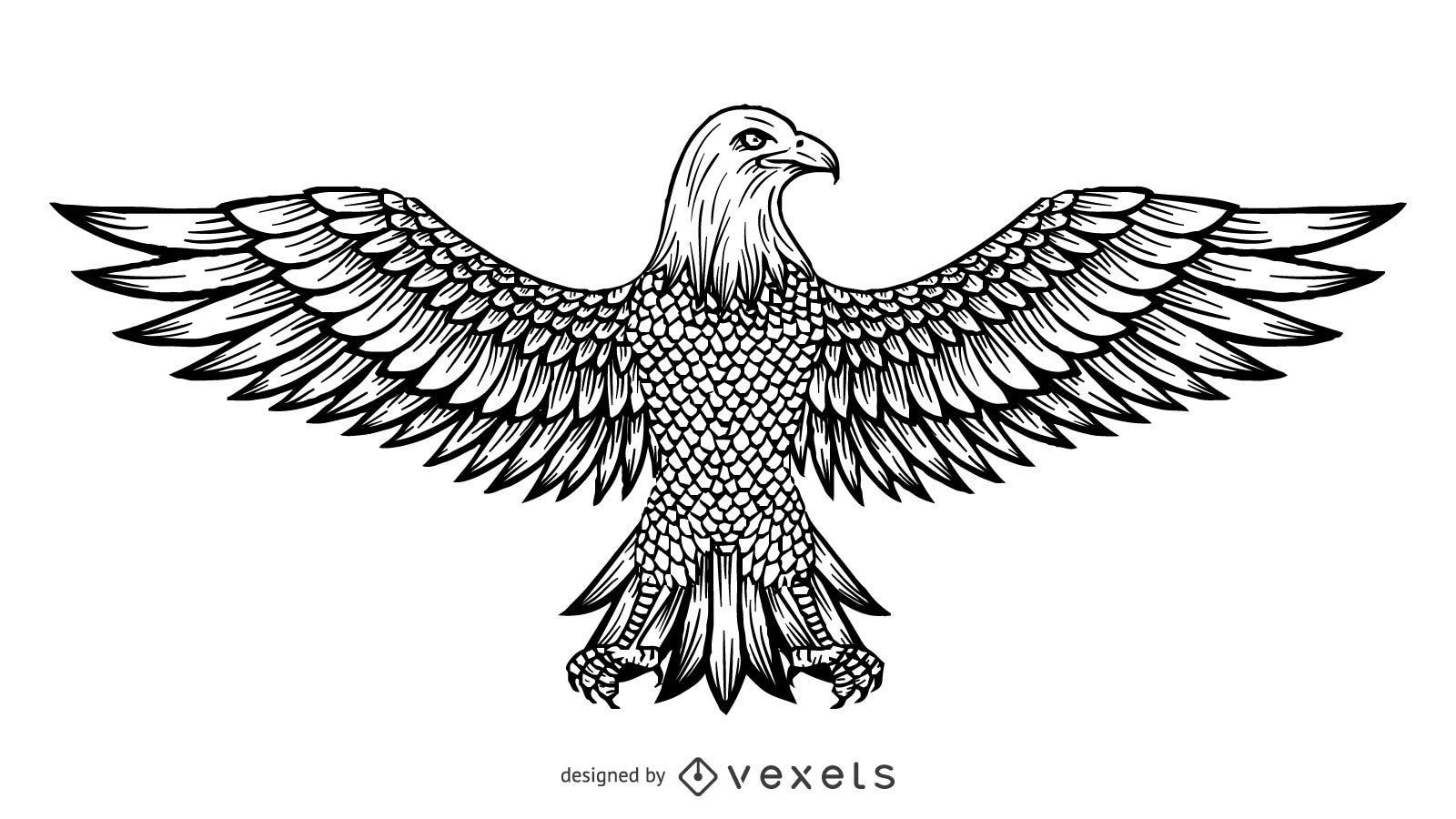 Line Art Vector Design : Vector line drawing of the eagle download