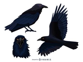 Conjunto de ilustración de cuervo