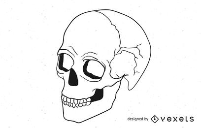 Cráneo vector 2