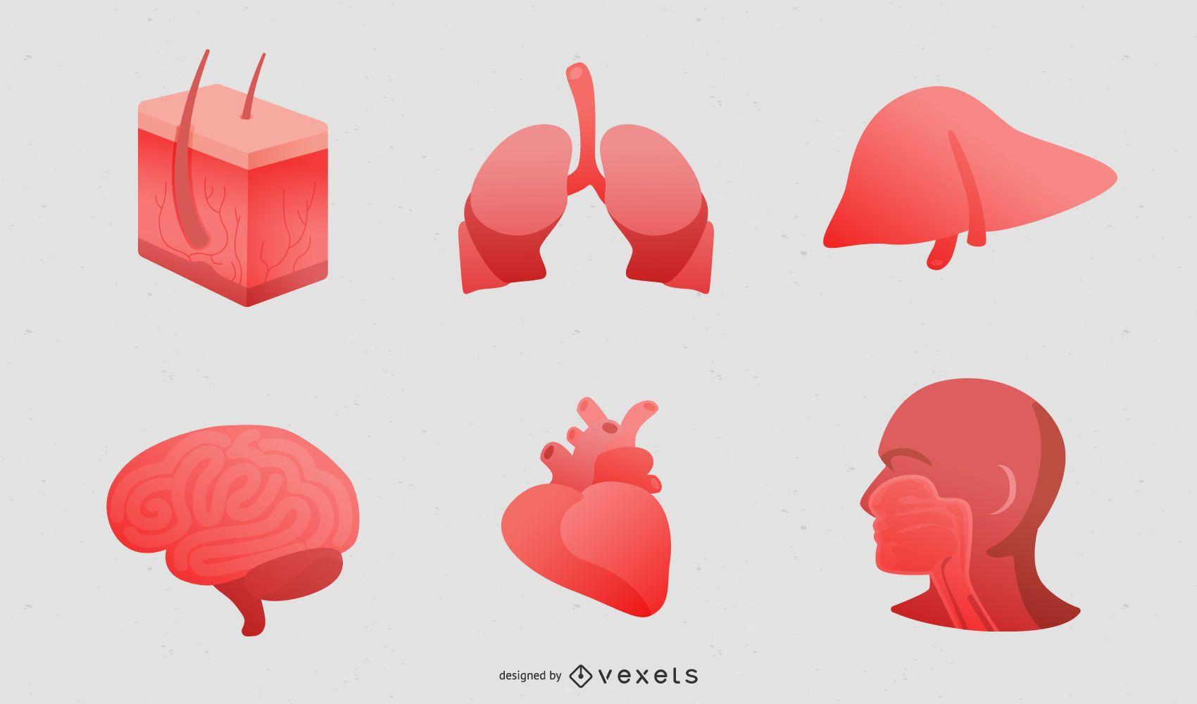 Perspective Of Human Organs Vector