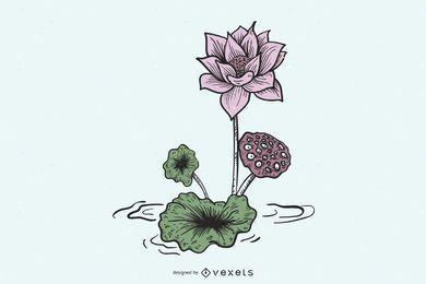 Both Classical Lotus Lotus Root Vector