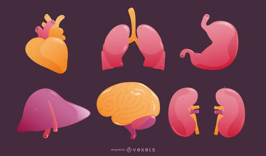 Human Organs in 3D