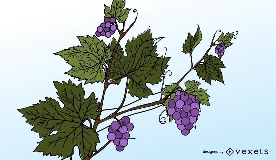 Uvas moradas y hojas de uva vector