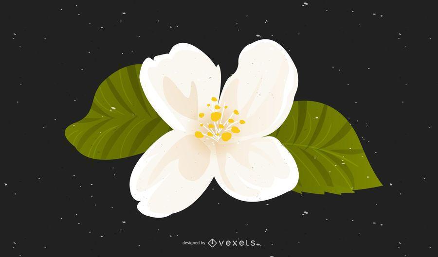 Vector Jasmine Original
