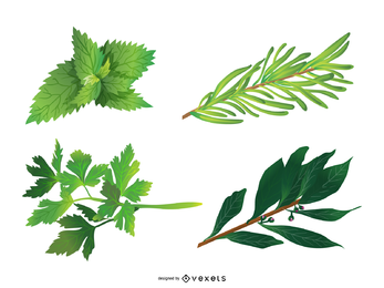 Herbal Leaves 05 Vector