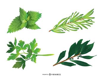 Vector de hojas de hierbas 05
