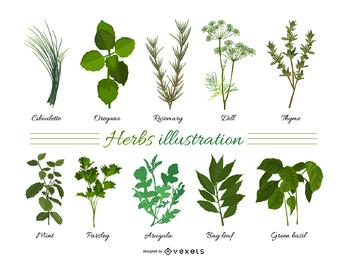 Folhas de ervas 01 vector