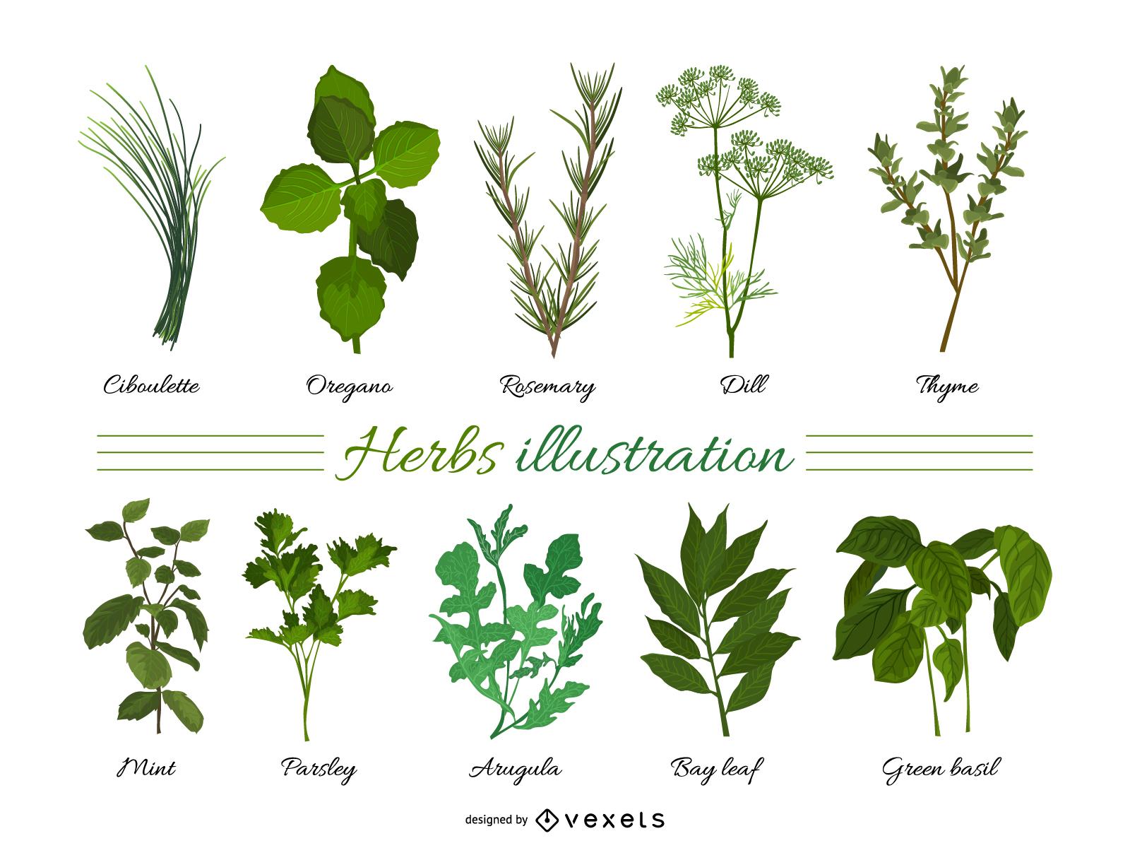 Vector de hojas de hierbas 01