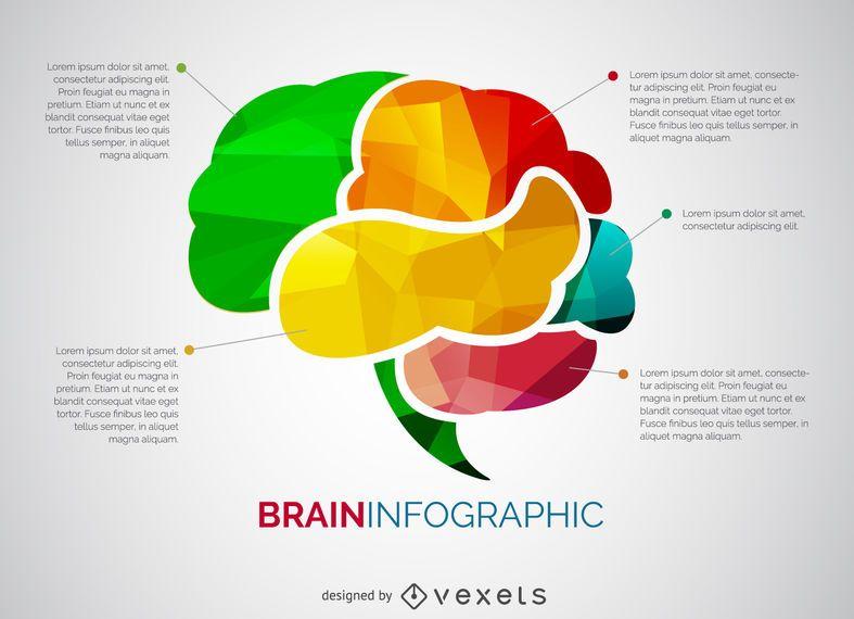 Gehirn-Infografik