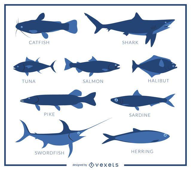 Cartel de especies de peces descargar vector for Especies de peces