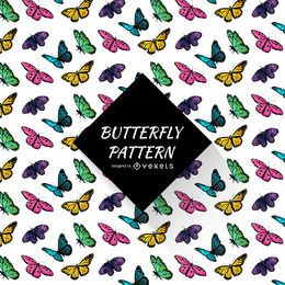 Teste padrão de borboleta colorido