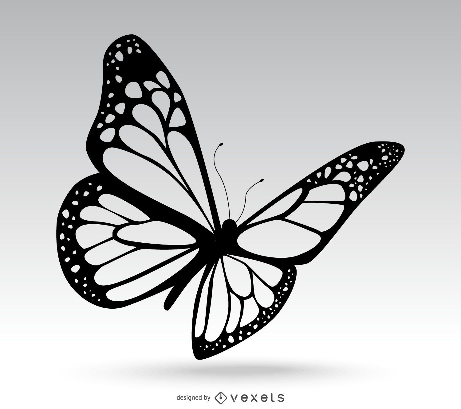 vanessa butterfly drawing images - HD1500×1333