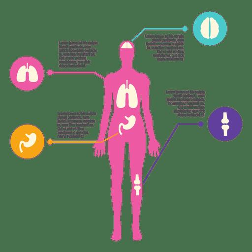 Diagrama de cuerpo femenino - Descargar PNG/SVG transparente