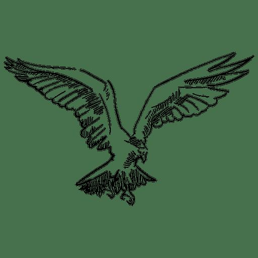 Pájaro volador Transparent PNG