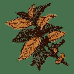 Planta de café dibujada a mano