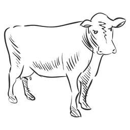 Hand drawn cow