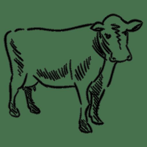Vaca desenhada de mão Transparent PNG