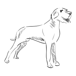 Hand drawn pet dog