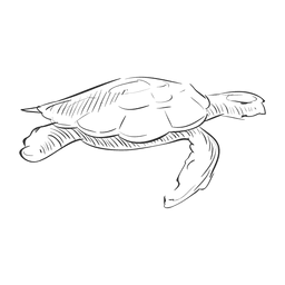 Tartaruga desenhada de mão