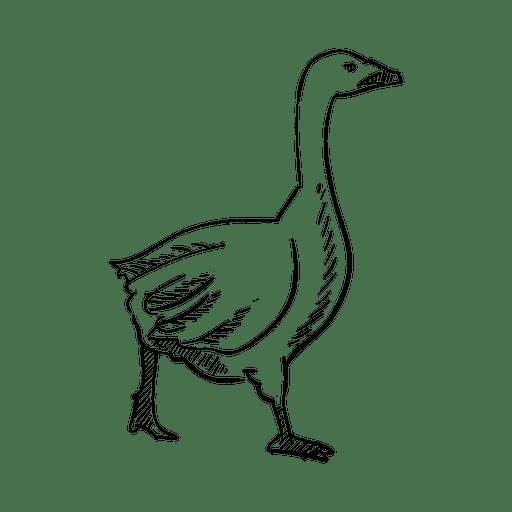 Dibujo A Lápiz De Ganso Descargar Pngsvg Transparente
