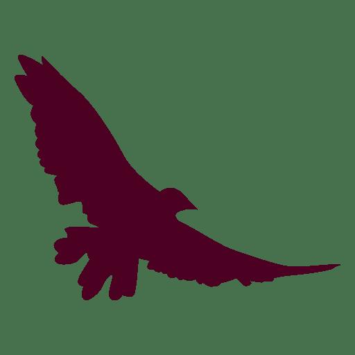 Alas extendidas pájaro vuelo