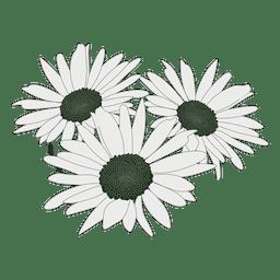 Ramo de flores de margarita