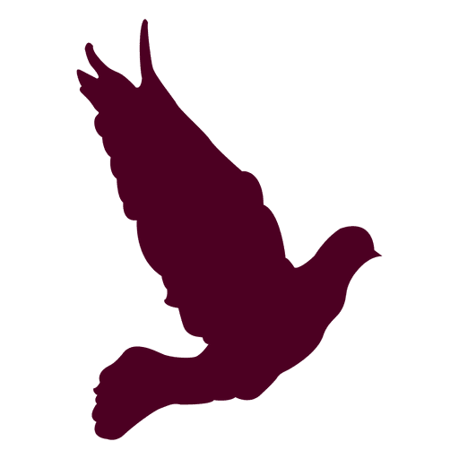 Dove flying sequence 11 Transparent PNG