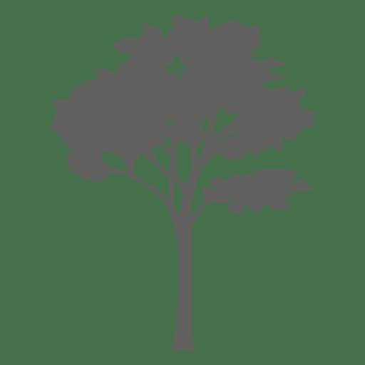 Maple tree silhouette 2