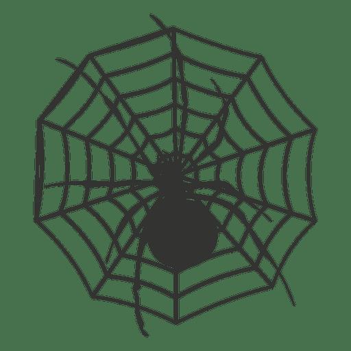 Spider on web 4