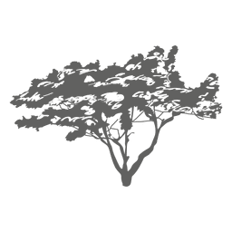 Tree silhouette 7