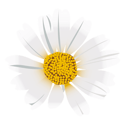 Daisy flower cartoon