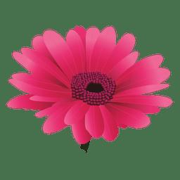 Maroon gerberal flower