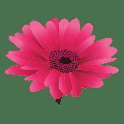 Maroon gerberal flower Transparent PNG